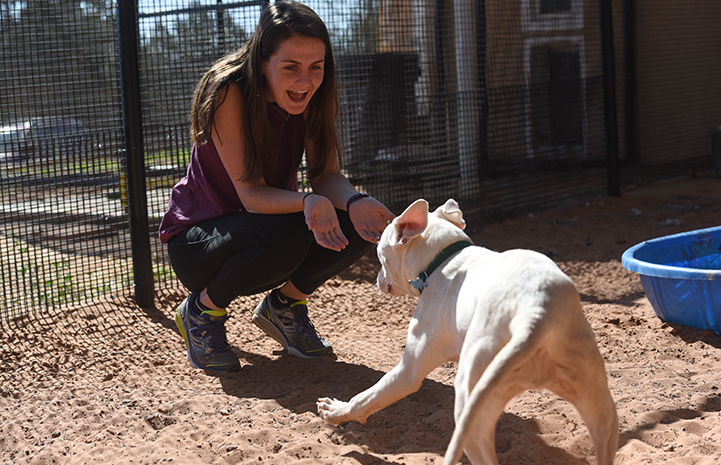 Woman with long hair playing with Ever, a white pit bull terrier type puppy with bowed legs