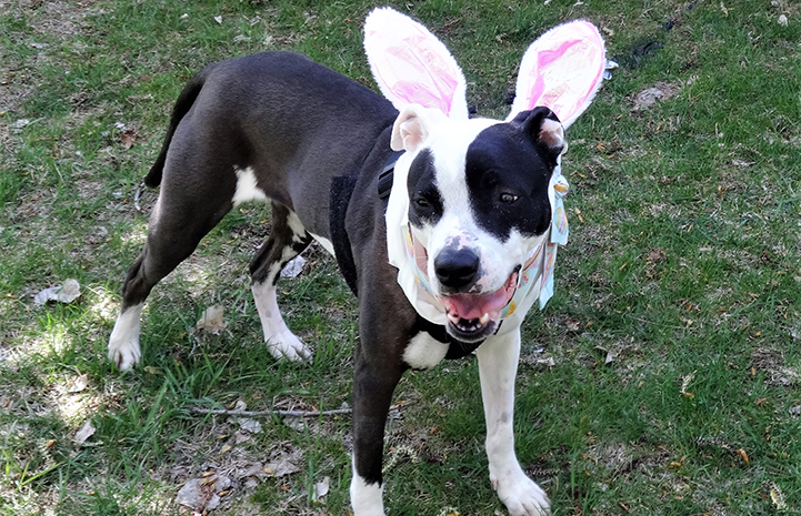 Jessie sporting her Easter bunny ears