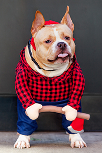 Ruthie the dog wearing a lumberjack costume for Halloween