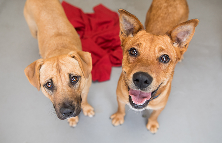 Ann Perkins the dog with her friend, Hera, at the Best Friends Pet Adoption Center in Atlanta