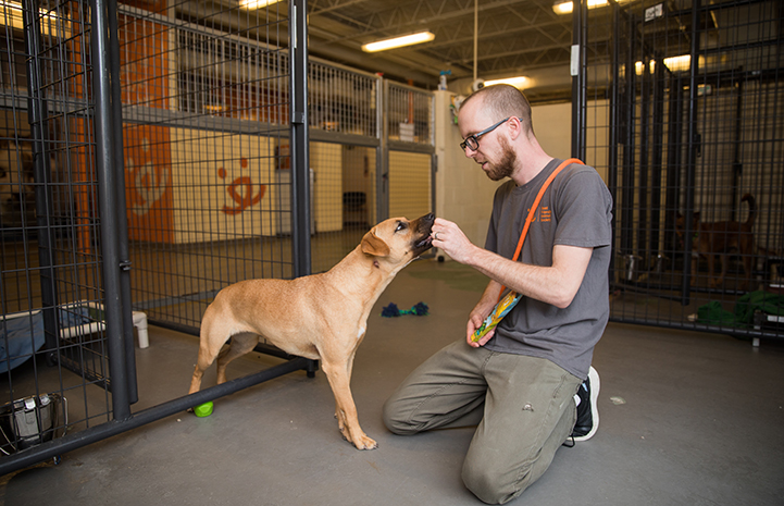 Greg Bechdol, the center's lead adoptions specialist, works with Ann Perkins the dog