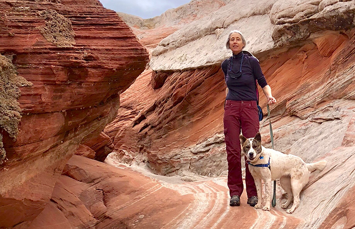 Volunteer Heather Harding takes hiking to a new level with Sun the dog