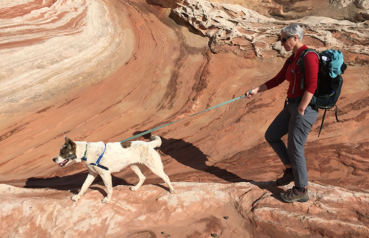 Volunteer Heather Harding walking Sun the dog the dog on a leash on a rock formation