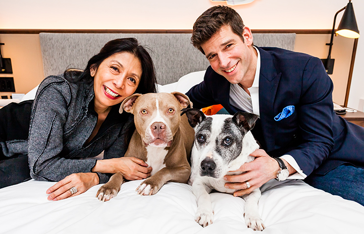Patrick and Mayda, with their prior dog and Micky their newly adopted brown and white pit bull terrier type dog, lying on a bed at The James NoMad in New York City