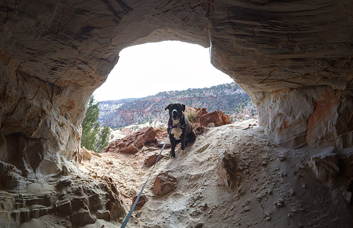 Manuel the dog standing in the opening of a cave