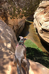 Trinity the dog looking down at a river from up on a rock cliff