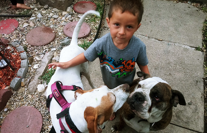 Young child petting Long John Silver as well as another dog