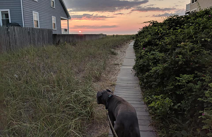 Vladimir the dog walking toward a beautiful sunset