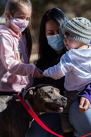 Stormy the dog being reunited with her family