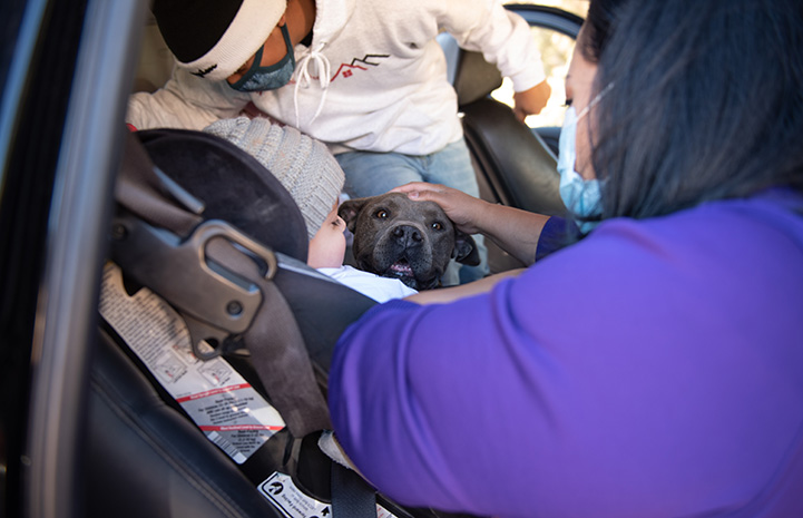 Stormy the dog in the car, with people surrounding her