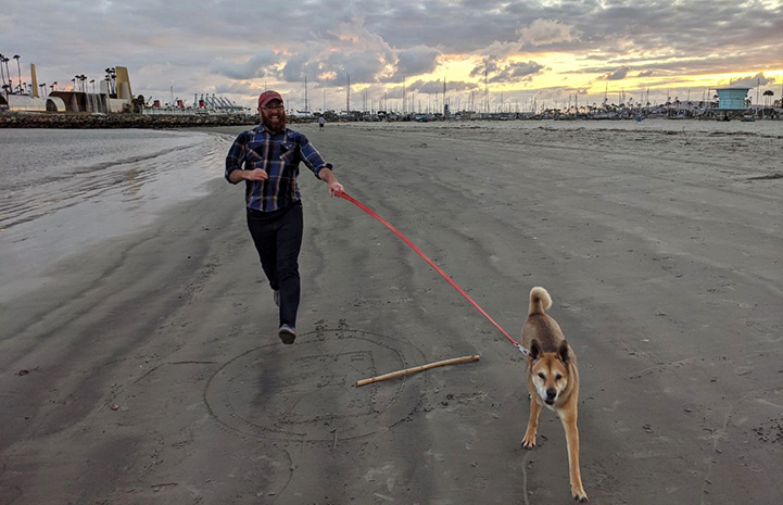 Brownie the dog running on a leash at a beach with a man