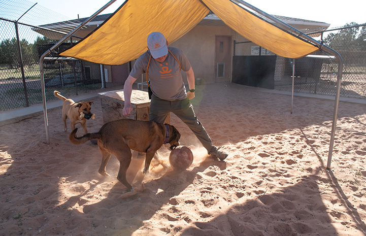 Volunteer Fred Rainey playing with a big ball under a sun shade with Holy Moly and Alice the dogs