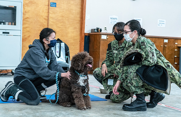 Military personnel wearing camouflage interacting with a Labradoodle-type dog