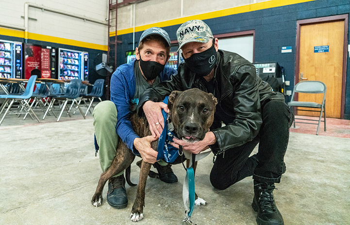 Two masked people, on wearing a Navy hat, hugging a happy brindle dog