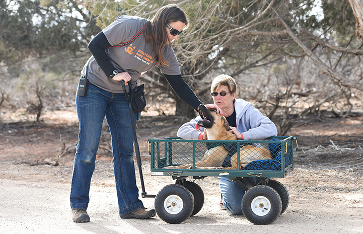 Dogtown caregiver Jess Cieplinski pulling Klaus the dog in a wagon while another woman pets him