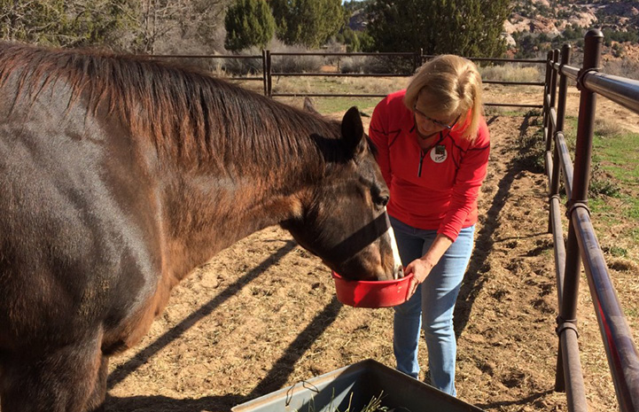 Woman volunteer feeding a horse out of a red bowl