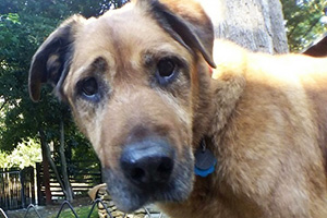 Spartacus, a senior dog who was adopted