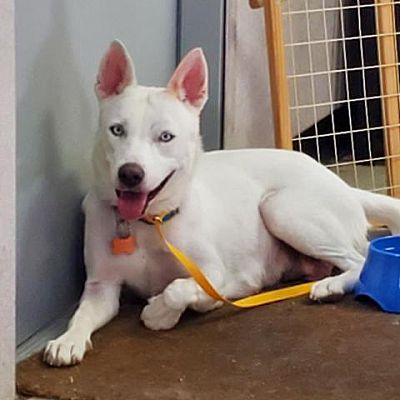 Adopt Elsa the dog available for adoption from Houston