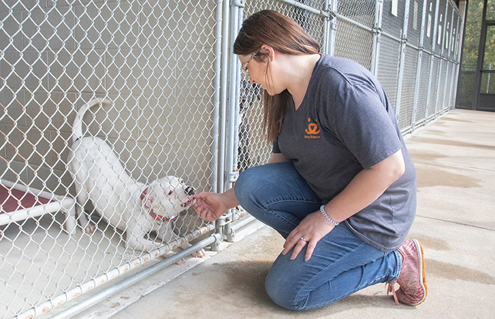 Person wearing Best Friends shirt kneeling down to interact with a dog in a kennel who is doing a play bow