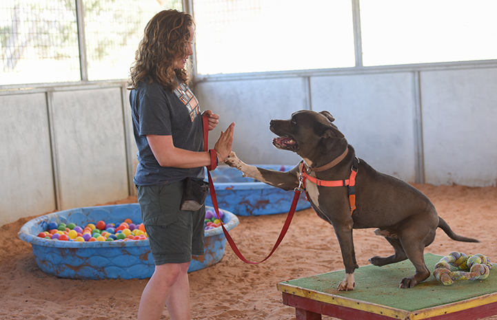For a dog as big and powerful as Moose, it was especially important to address his greeting and play styles before he accidentally hurt someone