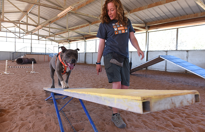 Nothing makes Moose the dog happier, or has a longer-lasting and more calming effect, than a session on the agility course