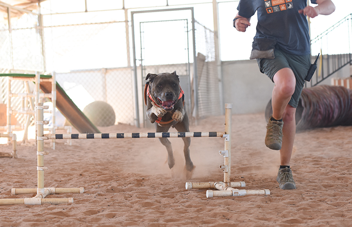 For Moose the dog, agility was the winning ticket