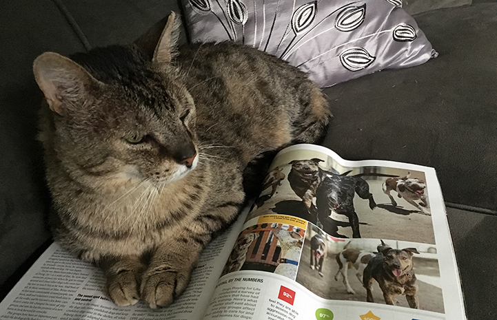 The Best Friends magazine makes a good bed for Hob