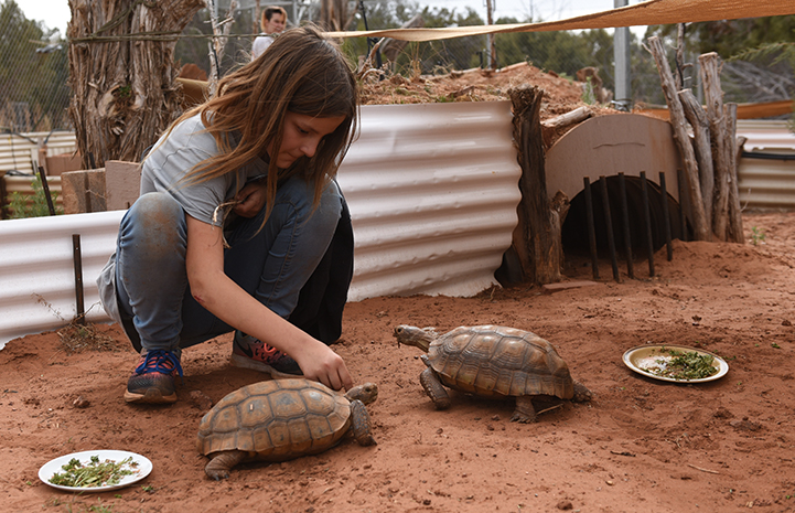 The Winnick family volunteering at Wild Friends with the tortoises