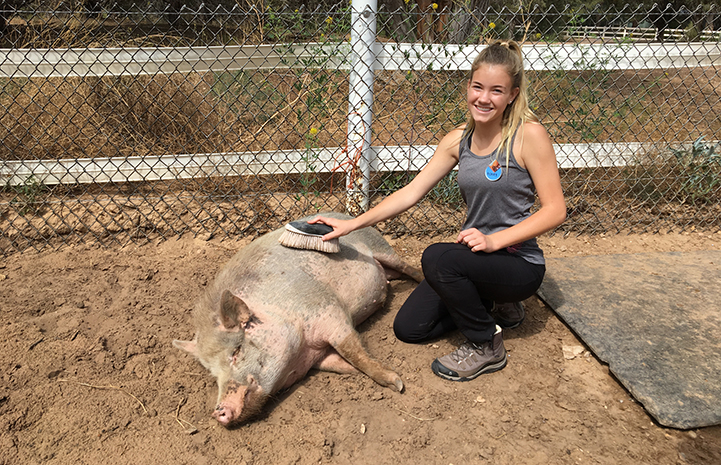 Ashley in Piggy Paradise brushing Wally the potbellied pig