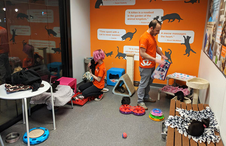 Justin and Bella Brodie volunteering in a cat room at the Best Friends Lifesaving Center in Salt Lake City