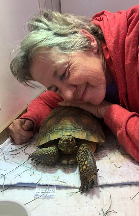 Animal care float Chris leaning down to be next to Kalahari the desert tortoise