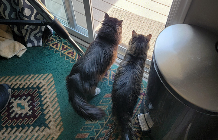 Rico and Kelly the cats looking out a glass door