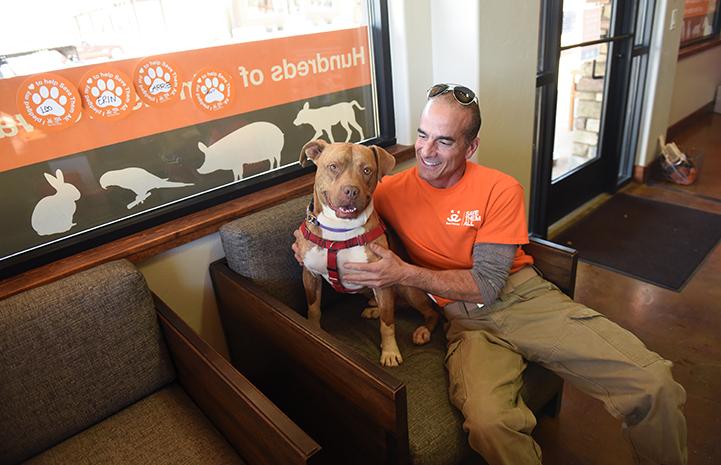 Brown pit-bull-terrier-type dog, Ledger, at the Best Friends Visitor's Center with Dogtown volunteer and part-time staffer Tim