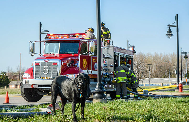 Smokey the firehouse dog in front of a fire truck with multiple firemen