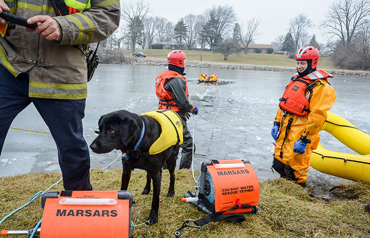 Smokey the firehouse dog at a lake with firemen participating in a water rescue