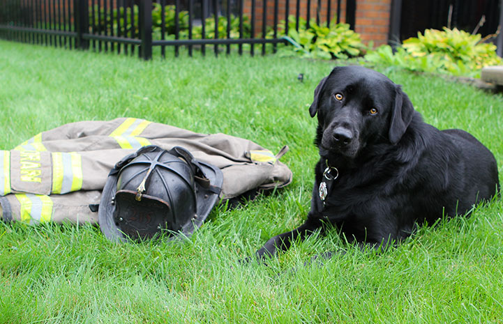 Smokey the firehouse dog in the grass next to a fireman's helmet and coat