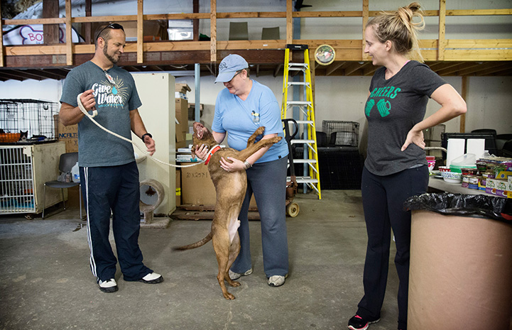 Folks helping transport animals out of Florida prior to Hurricane Irma