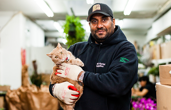 Tom, a shorthair cream tabby, being held by his adopter inside a flower shop
