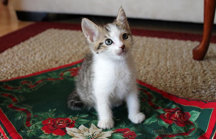Obi as a little kitten