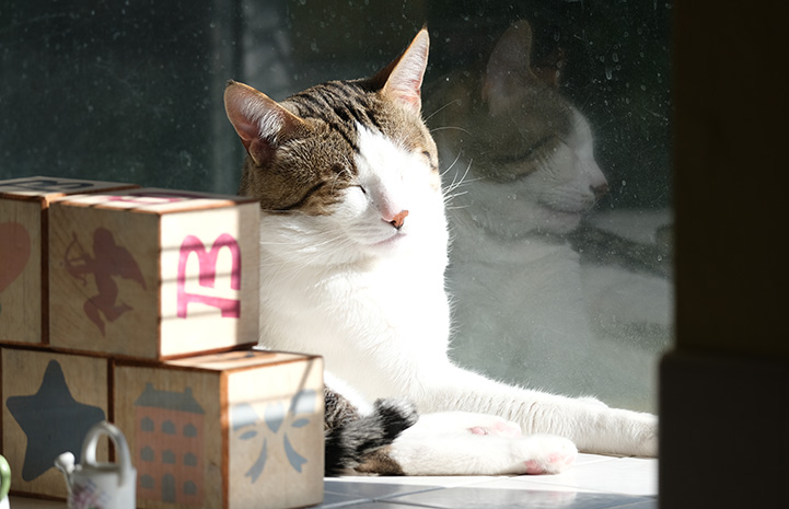 Obi laying in the sun next to toy blocks