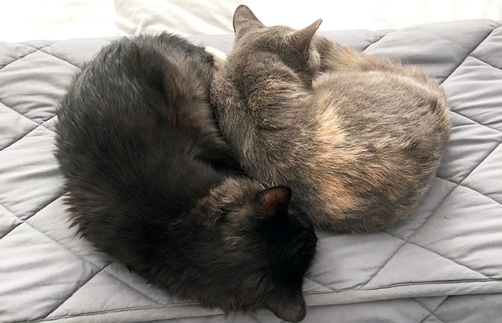 Bridget and Mookie the cats sleeping next to each other