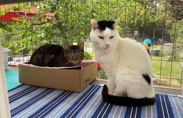 Sam the cat sitting on a mat next to a tabby cat lying in a cardboard box in a windowsill