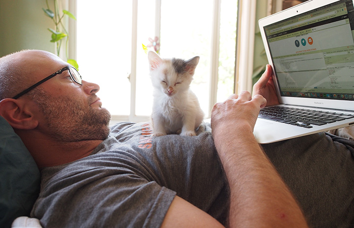 Man lying on a bed working on the computer with a foster kitten sitting on his chest