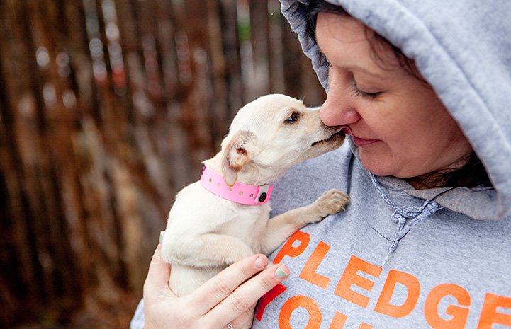 Small white Chihuahua being held by a woman wearing a hoodie and kissing her on the nose