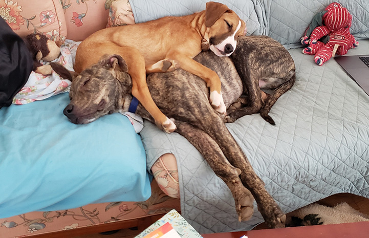 Puppy sleeping on top of another sleeping dog on a couch