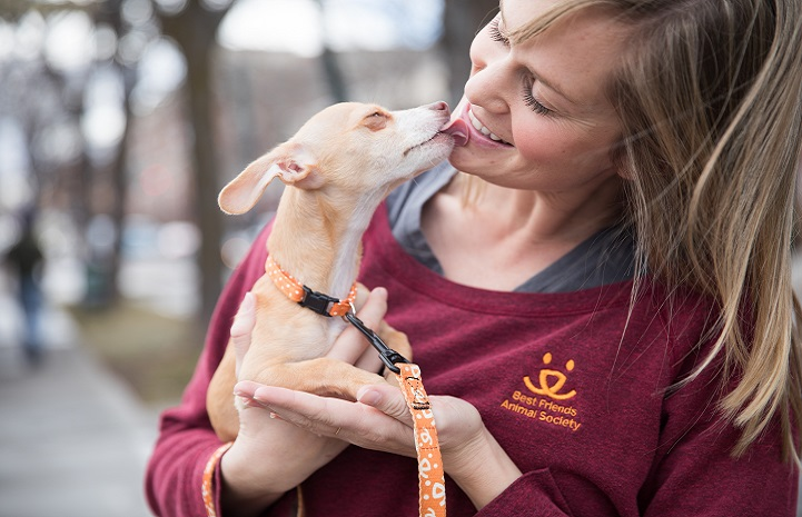 Small dog kissing a woman on her chin