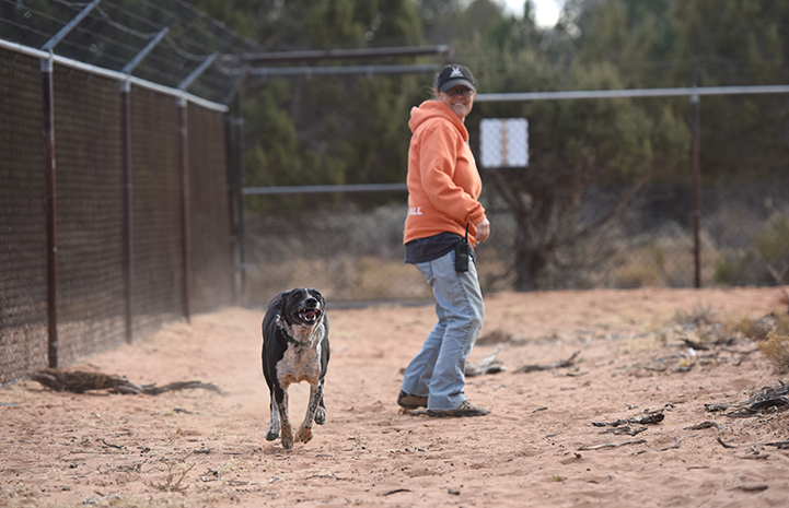 A leash-free dog running in a fenced-in dog park