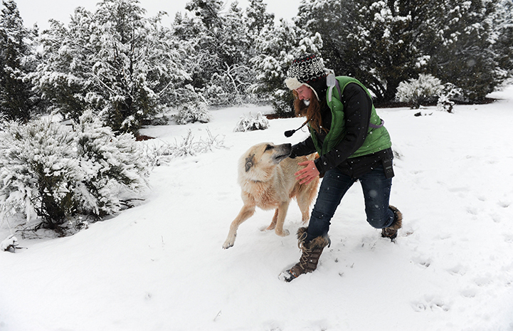 Woman with a great pyrenees type dog running together in the snow