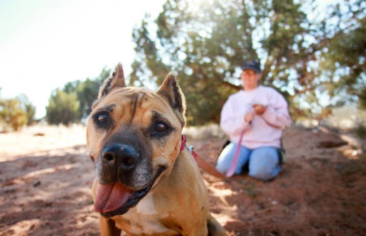 A smiling Georgia the Vicktory dog