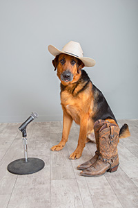 German shepherd Porter wearing a cowboy had next to a pair of boots and a microphone